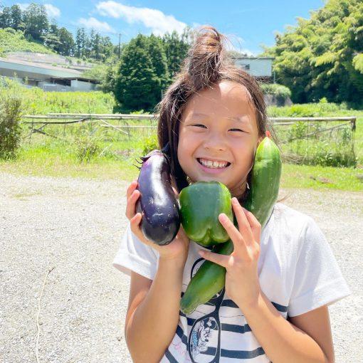 2021年の夏野菜