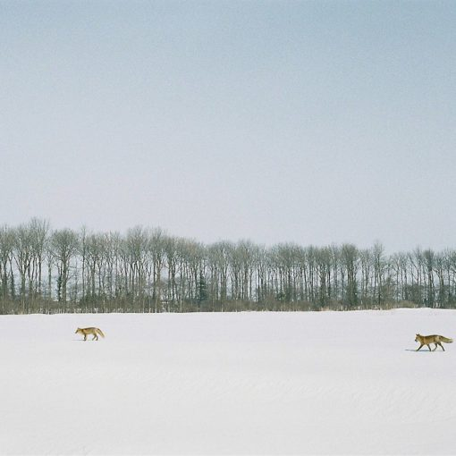 身近な野生動物