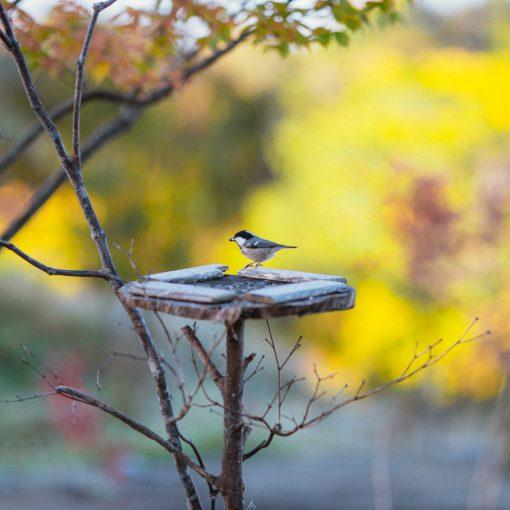 野鳥の季節