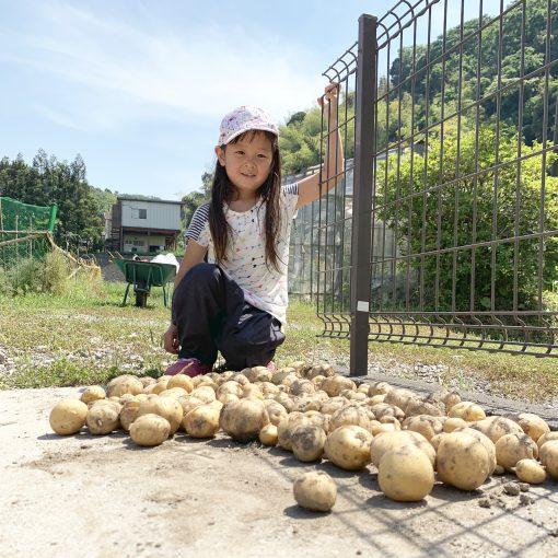 ジャガイモ収穫 畑2019その1